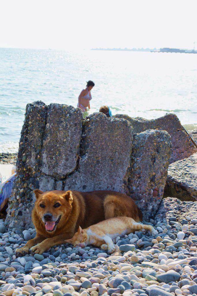 Pies na plaży w Suchumi